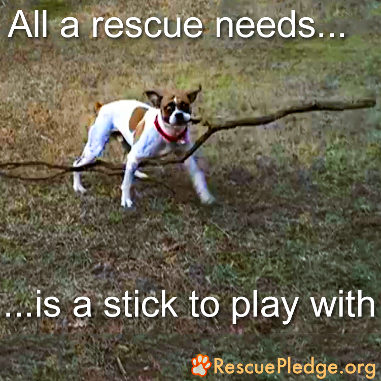 All a Rescue Needs